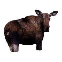Montana Moose II Decoy