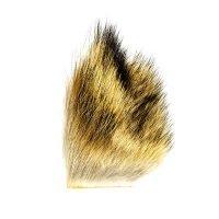 Coyote Fur