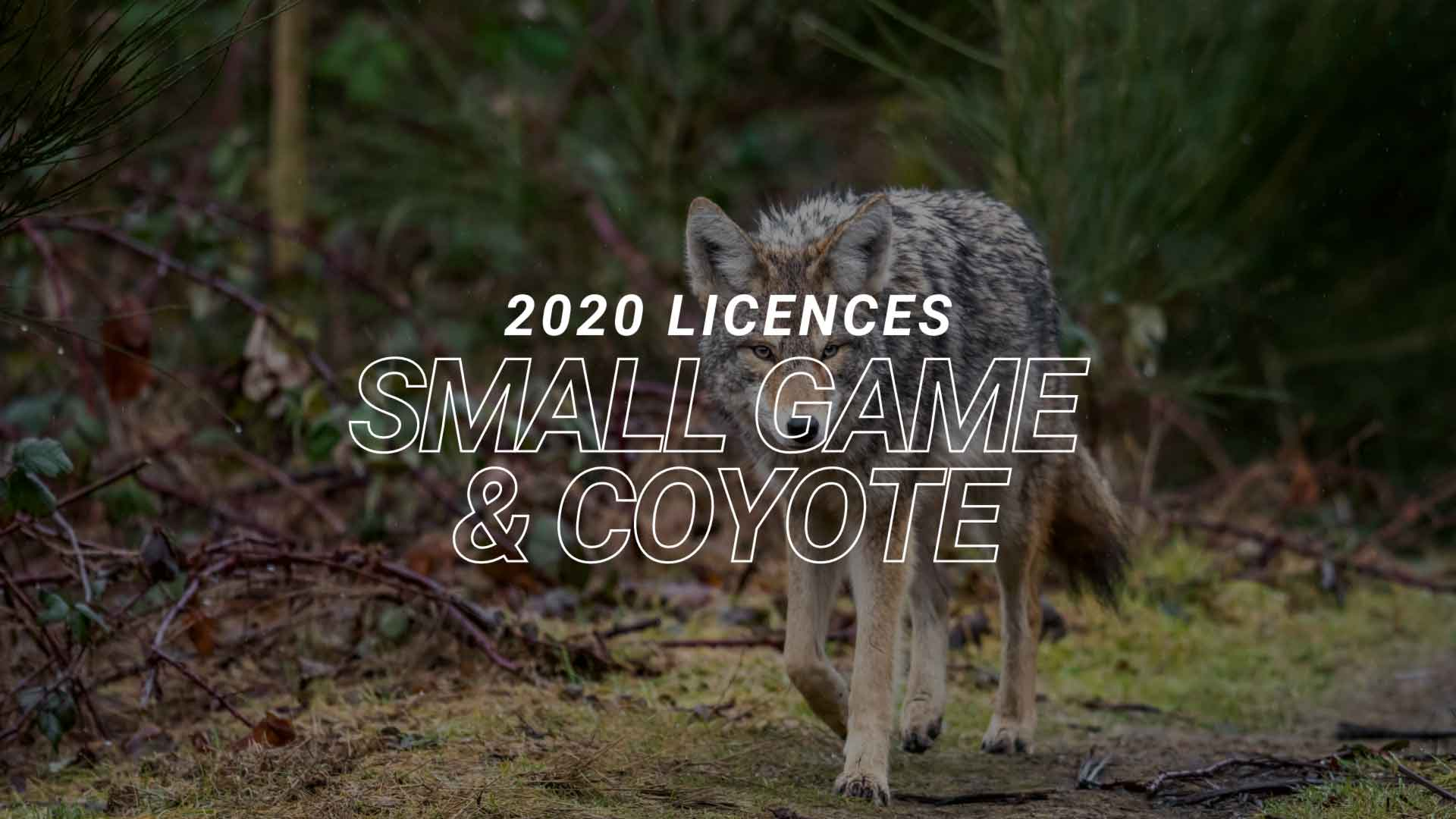 2020 Small Game Coyote